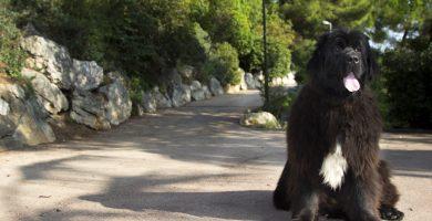 educador canino barcelona