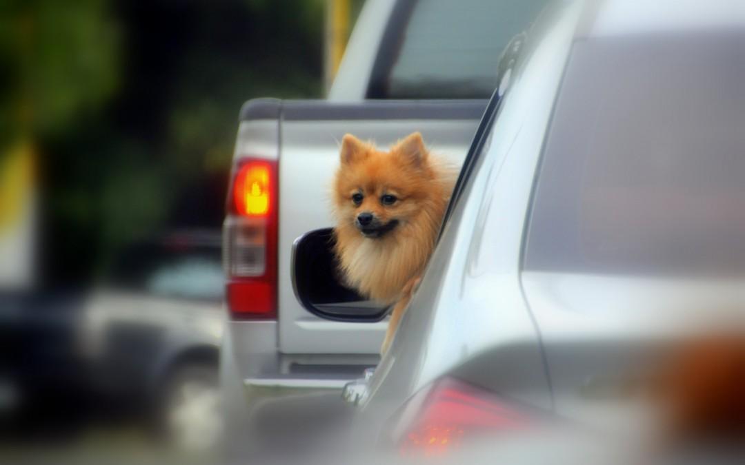 Los perros y la contaminación