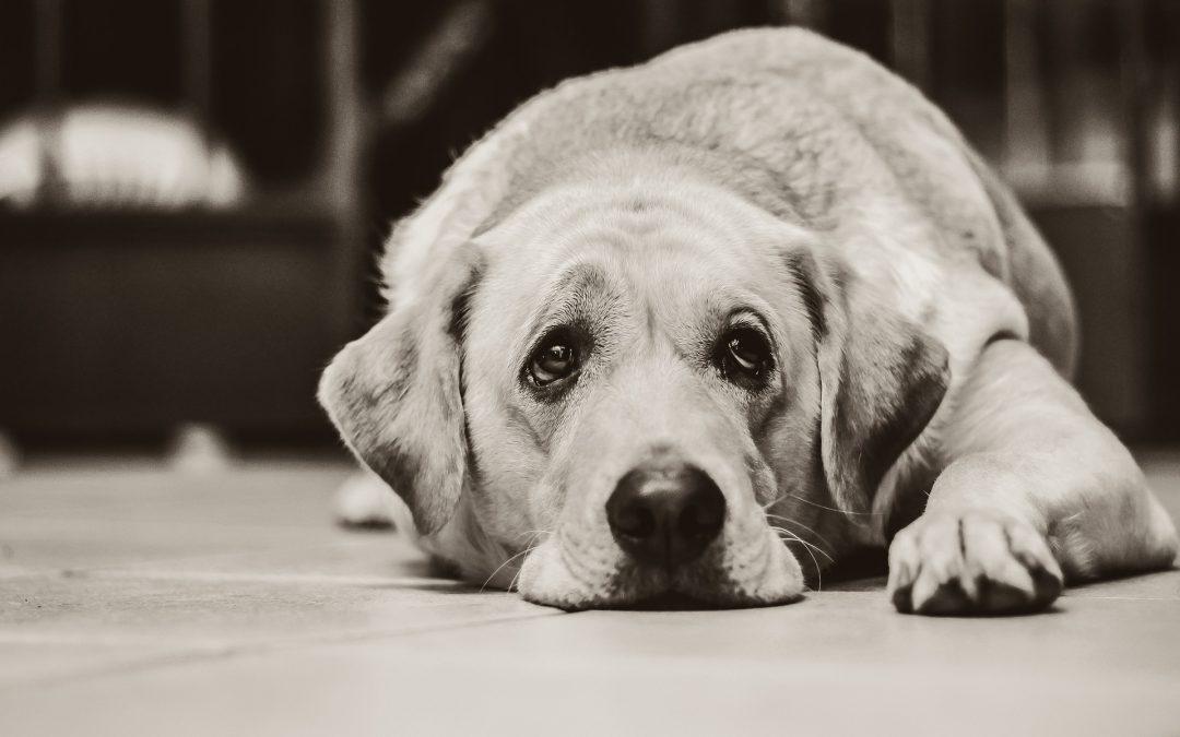La mejor manera de ayudar a un perro