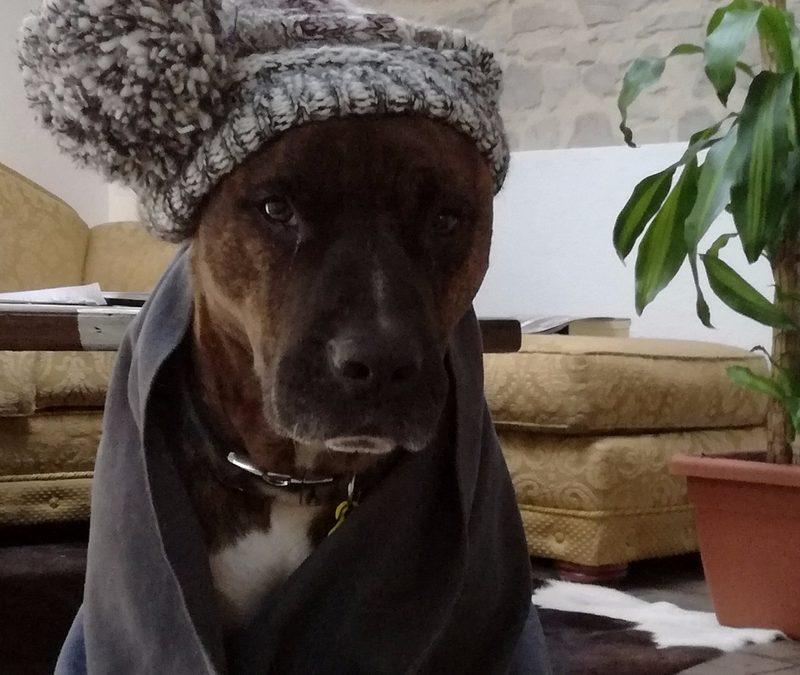 Como proteger a tu perro del frío.