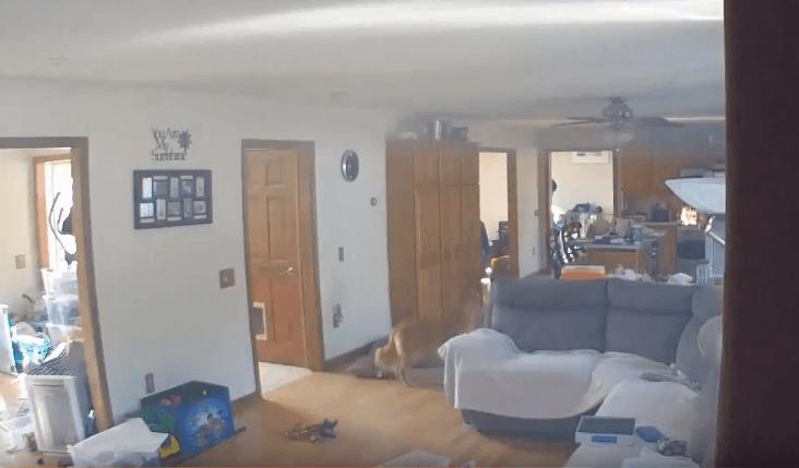 El peligro de dejar a tu perro solo.