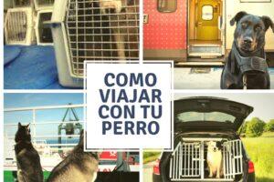 perros preparados para viajar