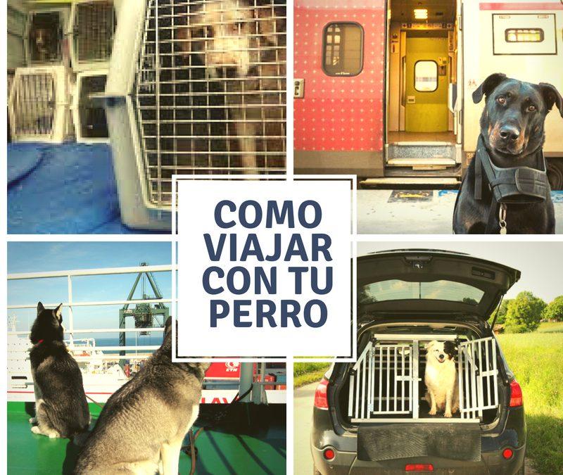 Viajar con tu animal de compañía.