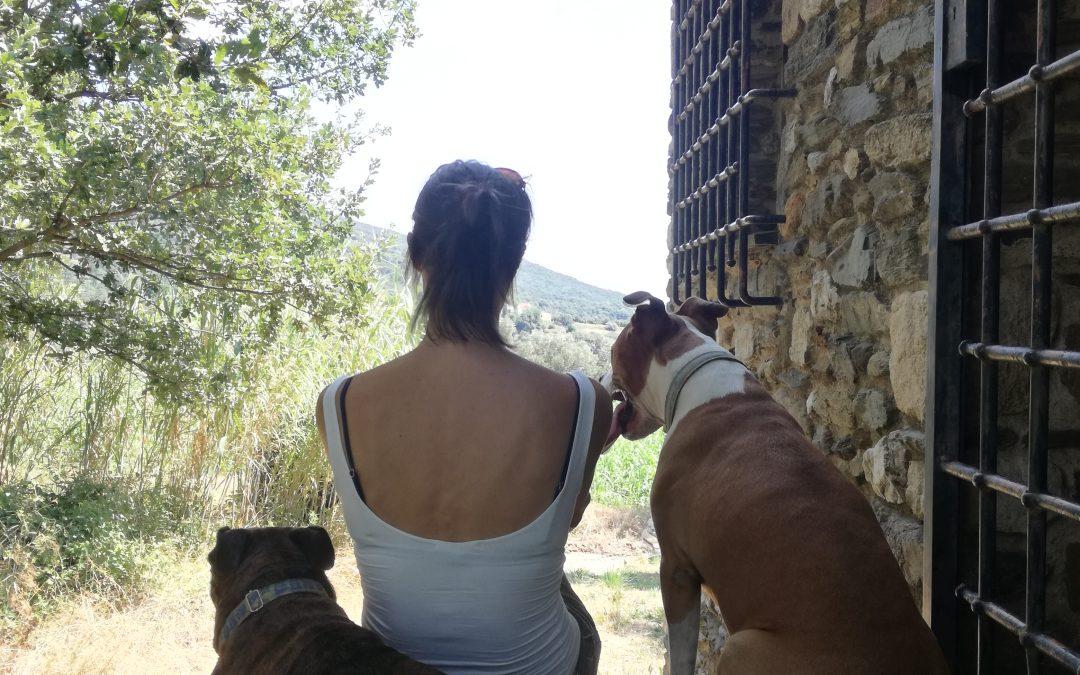 Los perros detectan la tristeza de sus dueños.