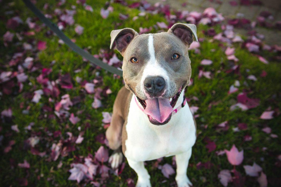 Perro sentado campo con flores