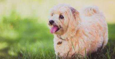 que hacer si pierdes a tu perro