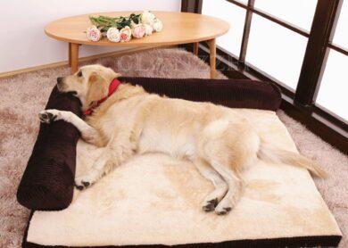 cama rectangular para perros