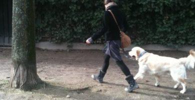 ejercicios con perro