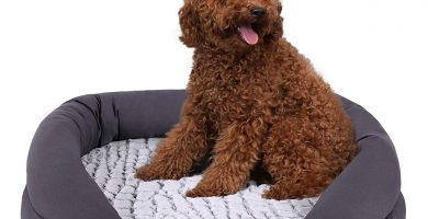 sofá cama perros